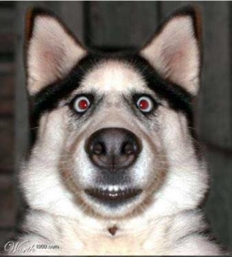 cane allucinato